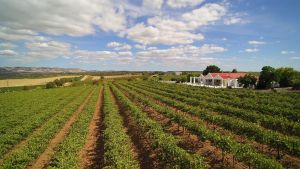 1837 Barossa Luxury Vineyard Cottages - Accommodation Ballina